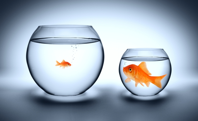 Big Fish Small Pond, Small Fish Big Pond